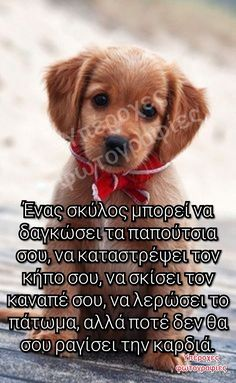 Dog Quotes, Cute Quotes, Qoutes, My Best Friend, Best Friends, Animals And Pets, Cute Animals, Greek Beauty, Greek Quotes