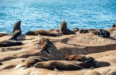 Em Cabo Polonio, os visitantes são apresentados aos leões marinhos, os ilustres…