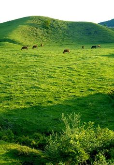 You have to love the open spaces agriculture preserves! Prado, Kumamoto, Kyushu, Japanese Mountains, Country Scenes, Country Life, Country Charm, World Of Color, Heaven On Earth