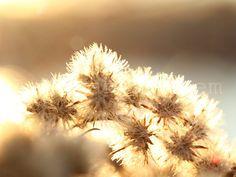 earlyXMAS - Naturfotografie Foto Makro Herbstlicht von ArtvanArnhem auf Etsy, €4.95