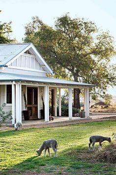Ideas for house exterior australian farm Australian Farm, Australian Homes, Australian Country Houses, Country Farm, Modern Country, Country Life, Porches, Weatherboard House, Queenslander