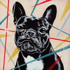 Jeff, the French Bulldog.