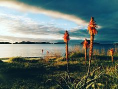 Golden hour on TeNgaere Bay. Photo by Amanda Bransgrove Bay Photo, Golden Hour, Amanda, Landscapes, Celestial, Mountains, Sunset, Nature, Flowers