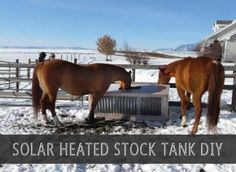Getting fresh water to your animals is obviously critical…and so is keeping it from freezing. A solar heated stock tank can take care both these issues this winter. There are electrically heated tanks but these come with drawbacks including getting electricity to the unit and the costs of running it all winter. Solar power just …
