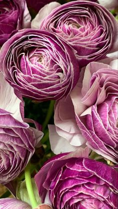 Wholesale Flowers And Supplies, Flowers Wholesale, Fresh Flowers, Wedding Flowers, Public, Rose, Plants, Pink, Plant