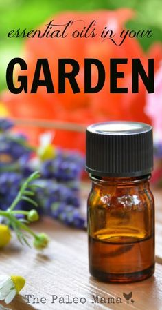 There are many wonderful ways to tend to your garden naturally and using essential oils for your garden is one healthy way. http://thepaleomama.com/2015/08/essential-oils-for-your-garden/