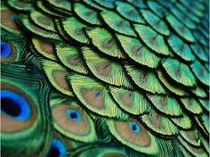 textura de plumas - Buscar con Google