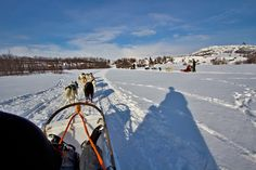 PHOTO: Husky teams pull two-passengers dogsleds through a pristine white landscape in Kirkenes Norway