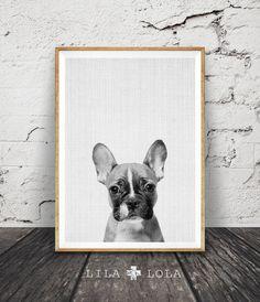 French Bulldog Wall Art Print, Black White and Grey Nursery Decor, Modern Minimalist Printable Instant Download, Peekaboo Animals, Dog Photography by Lila and Lola.