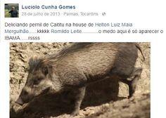 """""""O Grito do Bicho"""": Ministério cancela nomeação de chefe do Ibama que ..."""