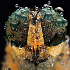 Macro Photos of Insect Eyes by Shikhei Goh.
