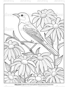 Art Drawings For Kids, Bird Drawings, Animal Drawings, Bird Coloring Pages, Coloring Book Art, Colouring, Flower Art Drawing, Flower Sketches, Glass Painting Designs
