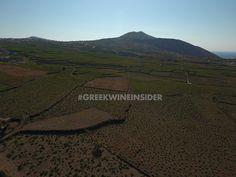 Vineyards in Santorini