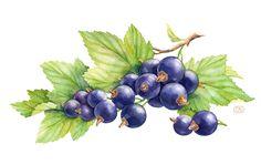 Blueberries - by Natalia Tyulkina