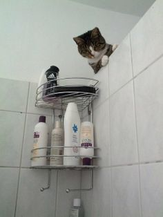 Shower cat is watching you