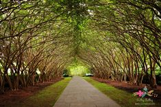 Beautiful tree tunnel at the Dallas Arboretum & Botanical Garden in Dallas, Texas. This is the perfect spot for an outdoor wedding in Dallas or a beautiful place to go for a walk and family pictures. www.carleykelley.com @dallasarboretum