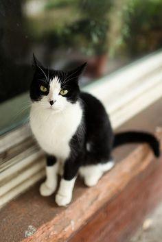 Adorable black and white kitten