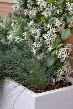 Las 9 mejores plantas para terrazas, áticos y jardines en patios