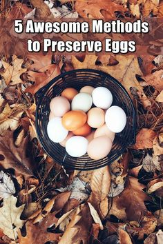 5 Awesome Methods to Preserve Eggs - With the following alternatives to your eggs going bad quickly, you won't have to worry about accidentally cracking a bad egg over your frying pan for those fried eggs you were planning to have for breakfast ever again.