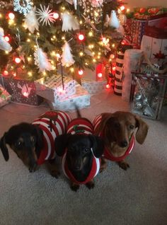 Cute Puppies, Cute Dogs, Dachshund Costume, Animals And Pets, Cute Animals, Dog Heaven, Wiener Dogs, Hershey Kisses, Dachshund Love