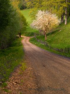 Photograph Country Lane by Wendy Kennedy on 500px