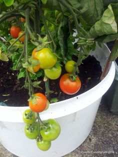 Roasted Tomato & Ramiro Pepper Soup Stuffed Pepper Soup, Stuffed Peppers, My Recipes, Cooking Recipes, Basil Plant, Grow Together, Roasted Tomatoes, Irish, Posts