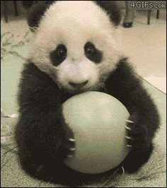 Panda Ball on http://www.drlima.net
