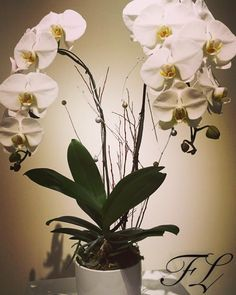awesome vancouver florist If you would like to get one of these beautiful Orchids please visit http://ift.tt/1P28gbG. Or call 604-319-0787. Price:$70. #orchiddesign #orchid #flowerluxury #onlineflorist #decoration #instaflower #freshflowers #flowerarrangement by @flower_luxury  #vancouverflorist #vancouverflorist #vancouverwedding #vancouverweddingdosanddonts