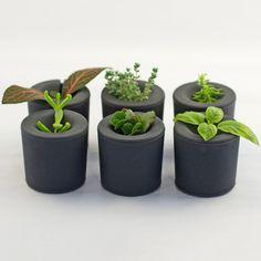 Fab.com | Rootcup Gray Set Of 6