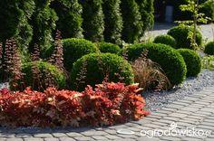 """Jak """"ożywić"""" mój szmaragdowy ogród - strona 1256 - Forum ogrodnicze - Ogrodowisko"""