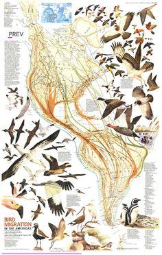 Bird Migration in the Americas