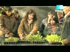 Curso de huerta Orgánica - 4 (La siembra 2da parte) 1 - YouTube Compost, World, Painting, Gardens, Vegetable Gardening, Landscaping, Pest Control, Painting Art, Paintings