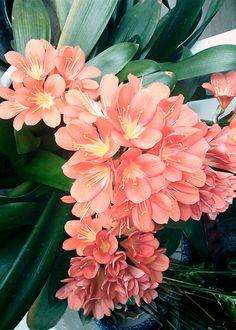 Orange color flower