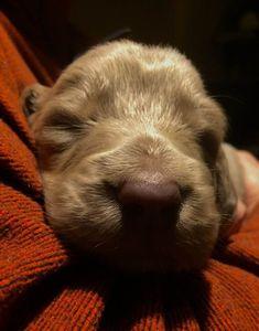 Tiny Baby Balou a.k.a Ryder
