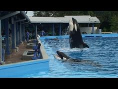 Dine with Shamu at SeaWorld Orlando Overview - Food Offerings, Whales and Trainers, Sea World