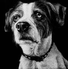 Archie | Melissa Helene Fine Arts 6x6 scratchboard www.melissahelene.com #scratchboard #scratchart #art #artwork #blackandwhite #dog #dogportrait #petportrait #portrait #commission #melissahelenefinearts Drawing Projects, Drawing Ideas, Black Paper Drawing, Scratchboard Art, Scratch Art, Paper Animals, W 6, Wild Animals, Dog Art