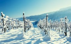 Snow winter wallpaper wood vineyard winter mountain village scenery wallpaper | 2560x1600 | 136293 | WallpaperUP
