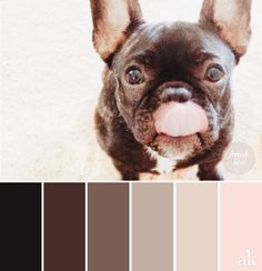 a french-bulldog-inspired color palette // dark brown, brindle, mauve taupe, blush pink