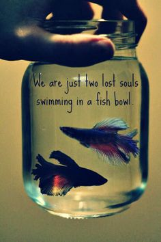 "Pink Floyd ""wish you were here"", 2 lost souls, hand, fish, akvarium, aquarium, swimming, fishy, quote, great music"