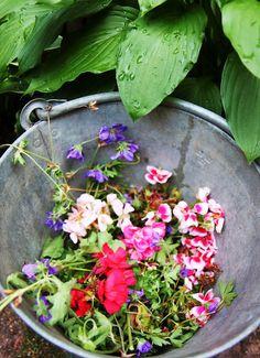 Geranium compost. Beautiful waste.