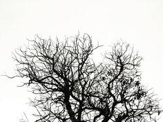 Dead Nature.   Naturaleza Muerta.   #photooftheday #shittylomography #blackandwhite #august  #blacknwhite #blackwhite #bnw_society #bnw_captures #bnw_photo #blackandwhitephotography #outdoors #streetphoto #streetphotography #streetview #streetphoto_bw #steetphotographer #simplicity #lumia #lumiacamera #thelumians #lumian #vsco #vscocam #vscom #mobilephotography #fotodeldia #fotografiamovil #fotografiacallejera #estosestupidoshashtags