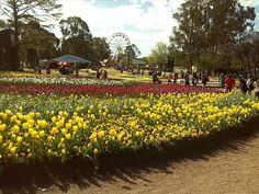 Floriade Canberra, stay in one of the Canberra holiday rentals, Canberra caravan parks Canberra hotels, by OzeHols Beach Accommodation, Holiday Accommodation, Caravan Parks, Australia Holidays, Australian Capital Territory, Best Holiday Destinations, Holiday Rentals, Farm Stay, Holiday Park