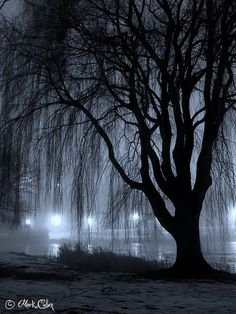 Night Willow: A willow tree alongside Juneau Park Lagoon in Milwaukee, Wisconsin.