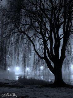 Night Willow A willow tree alongside Juneau Park Lagoon in Milwaukee, Wisconsin.