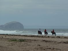 Exmoor Pony Trekking Univ of Edinburgh