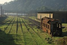 The industrial tracks, buildings, and equipment are being taken over by lush natural growth.