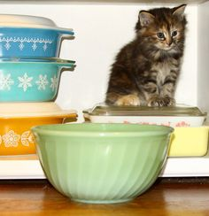 Moonlight Mile, cat in the cupboard