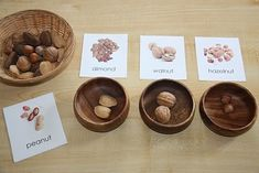 Free Nut Nomenclature Cards - good visual for do NOT eat for tree nut allergies