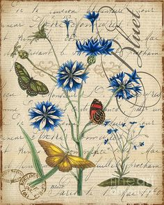 I uploaded new artwork to plout-gallery.artistwebsites.com! - 'French Botanical-Bluet' - http://plout-gallery.artistwebsites.com/featured/french-botanical-bluet-jean-plout.html via @fineartamerica