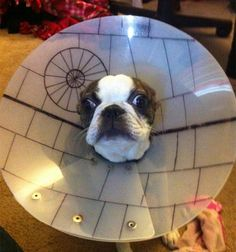 If you're going to have to wear the cone of shame, it might as well be the death star cone of shame.
